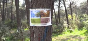 Kayışdağı Ormanları Tehlike Altında, Ataşehir Halkı Mesire ve Spor Alanı İstiyor.