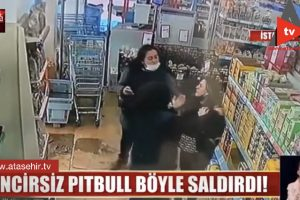 Son dakika… Ataşehir'de pitbull saldırısı! Genç kız dehşeti yaşadı..